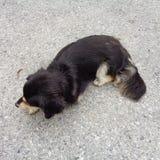 Cane che si siede sul marciapiede della pavimentazione fotografia stock