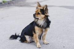 Cane che si siede sulla strada Fotografia Stock Libera da Diritti