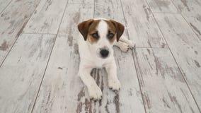 Cane che si trova a casa video d archivio