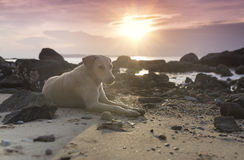 Cane che si trova in spiaggia Fotografie Stock