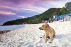 Cane che si trova in spiaggia Immagine Stock