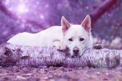 Cane che si trova sul tronco di albero Immagini Stock