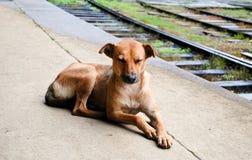 Cane che si trova sulla piattaforma Immagini Stock