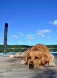 Cane che si trova, vista del lago su fondo Immagine Stock