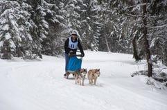 Cane che sledding con i husky Fotografie Stock Libere da Diritti