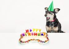 Insegna Del Gatto E Del Cane Di Compleanno Immagine Stock Immagine