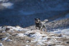 Cane che tiene un bastone fotografia stock libera da diritti