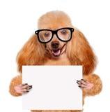 Cane che tiene un'insegna in bianco Fotografia Stock