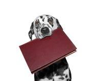 Cane che tiene un libro nella sua bocca Fotografie Stock