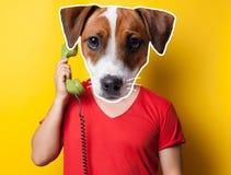 Cane che tiene un microtelefono fotografie stock