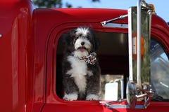 Cane che va a fare un giro in un grande camion. Immagine Stock Libera da Diritti