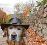 Cane in città Fotografie Stock