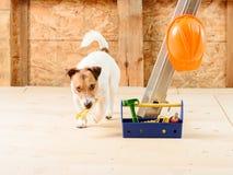 Cane come riparatore divertente alla casa della costruzione con la chiave e la cassetta portautensili Immagine Stock