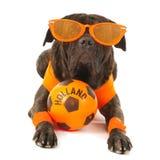 Cane come sostenitore olandese di calcio Fotografia Stock