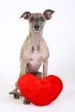 Cane con cuore Fotografie Stock Libere da Diritti