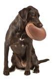 Cane con gioco del calcio fotografia stock libera da diritti