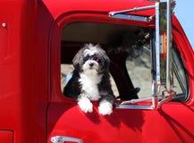 Cane con gli occhiali di protezione. Fotografia Stock