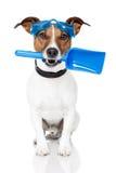 Cane con gli occhiali di protezione e una pala Fotografie Stock