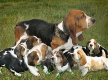 Cane con i cuccioli sull'erba Fotografia Stock