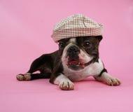 Cane con il cappello Immagini Stock Libere da Diritti