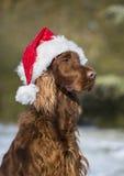 Cane con il cappello del Babbo Natale Fotografie Stock Libere da Diritti