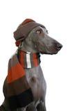 Cane con il cappello e la sciarpa Fotografia Stock