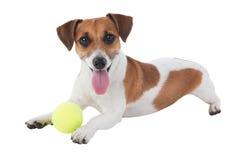 Cane con il giocattolo immagini stock