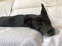 Cane con il pc Amore cute Casa fotografie stock libere da diritti