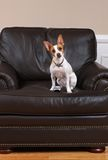 Cane con il periferico della TV Fotografia Stock Libera da Diritti