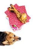 Cane con il presente dell'osso Immagine Stock