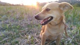 Cane con il Sun messo Immagini Stock