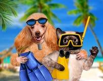Cane con l'operatore subacqueo del gatto fotografie stock libere da diritti