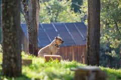 Cane con la collana intorno al collo, in natura, di mattina sole Fotografie Stock Libere da Diritti