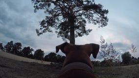 Cane con la macchina fotografica su una spiaggia stock footage