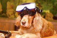 Cane con la maschera di immersione subacquea sullo strato fotografie stock