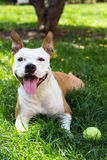 Cane con la palla nel parco fotografia stock