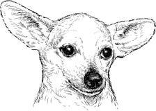 Cane con le grandi orecchie Fotografia Stock Libera da Diritti