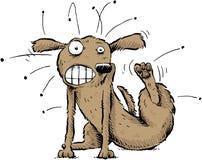 Cane con le pulci fotografia stock libera da diritti