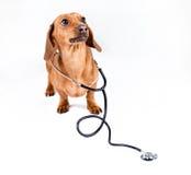 Cane con lo stetoscopio Immagini Stock Libere da Diritti