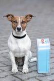Cane con un sacchetto blu Fotografie Stock Libere da Diritti