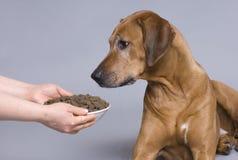 Cane con una ciotola piena dell'alimento immagine stock