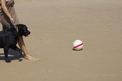 Cane con una palla Immagini Stock Libere da Diritti