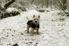 Cane coperto di ghiaccio nella neve fotografia stock