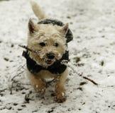 Cane coperto di ghiaccio nella neve fotografia stock libera da diritti