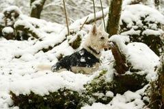 Cane coperto di ghiaccio nella neve immagine stock