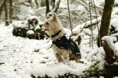 Cane coperto di ghiaccio nella neve immagini stock