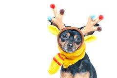 Cane in costume dei cervi, umore di inverno, cervo fantastico fotografia stock
