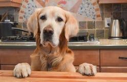 Cane in cucina Immagini Stock