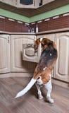 Cane in cucina Immagine Stock