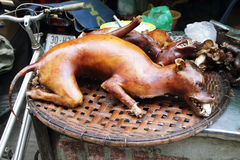Cane cucinato immagini stock